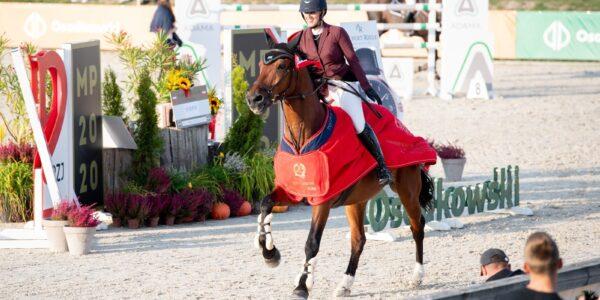Figaro sp – Najlepszy Koń Polskiej Hodowli wJakubowicach