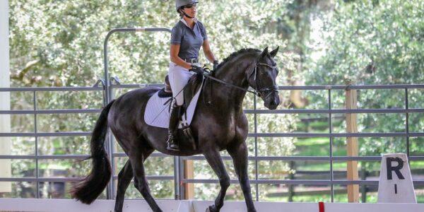 Koń rasy wielkopolskiej podbija Stany Zjednoczone