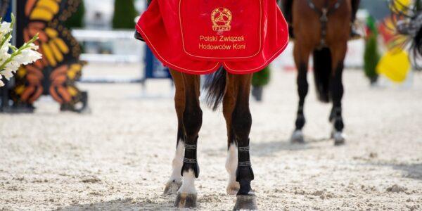 Najlepsze polskie konie wOlszy!